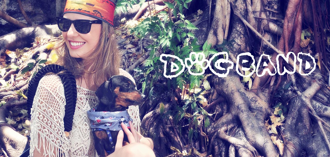HOME_DogBAnd2